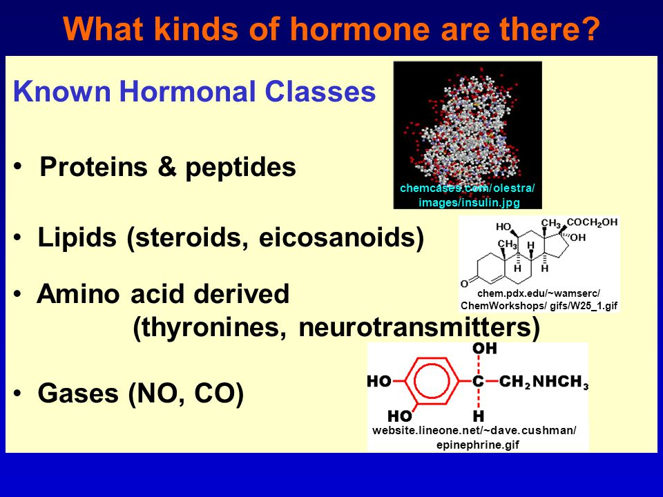 What kinds of hormone are there.