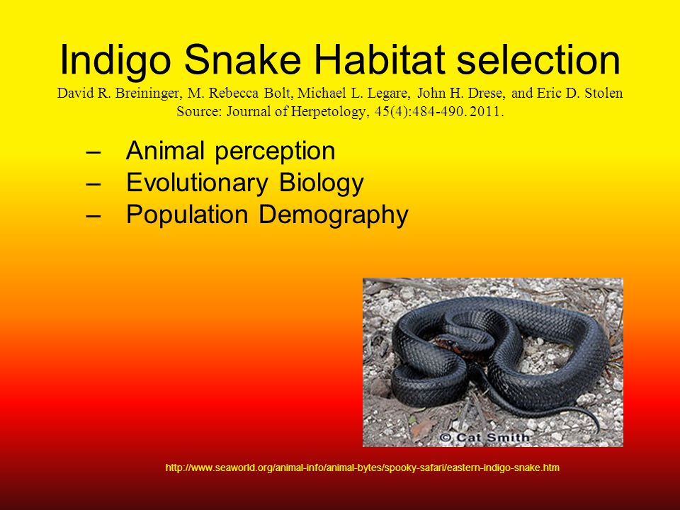 Indigo Snake Habitat selection David R. Breininger, M.