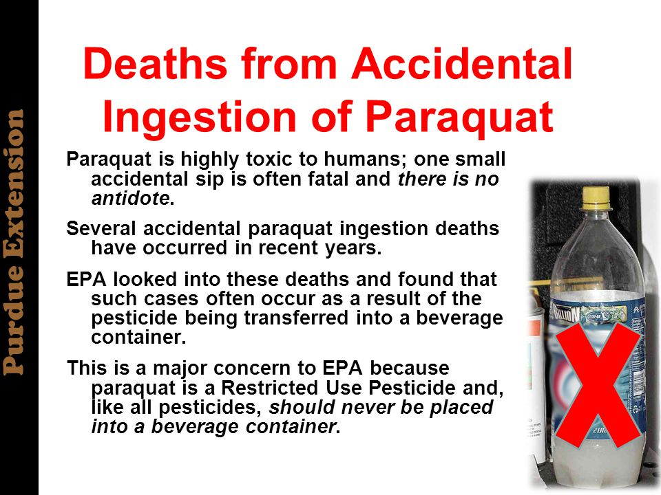 Purdue Extension Deaths from Accidental Ingestion of Paraquat Paraquat is highly toxic to humans; one small accidental sip is often fatal and there is no antidote.