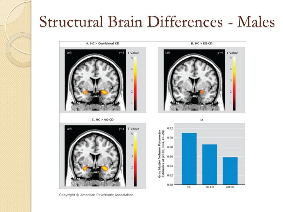 Structural Brain Differences - Males