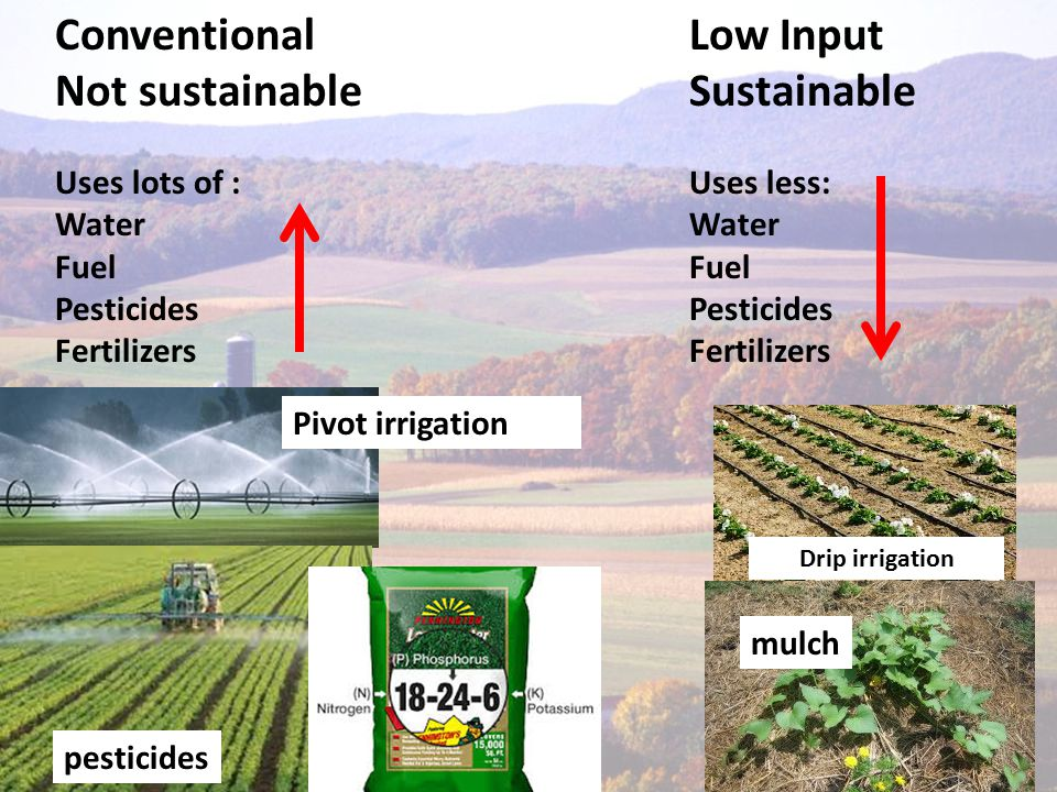 Conventional Not sustainable Uses lots of : Water Fuel Pesticides Fertilizers Low Input Sustainable Uses less: Water Fuel Pesticides Fertilizers Drip irrigation mulch pesticides Pivot irrigation