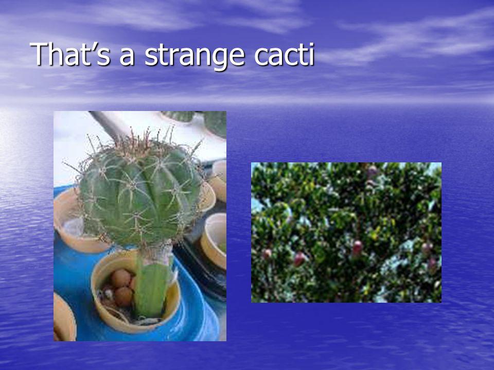 That's a strange cacti