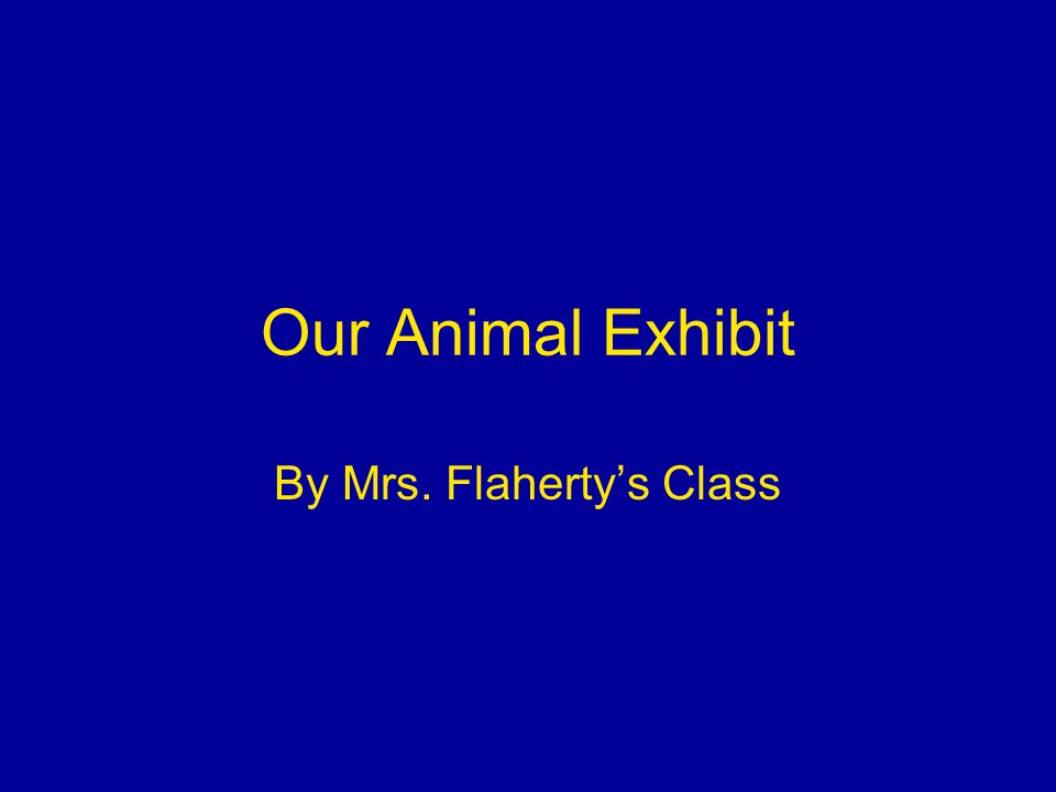 Our Animal Exhibit By Mrs. Flaherty's Class