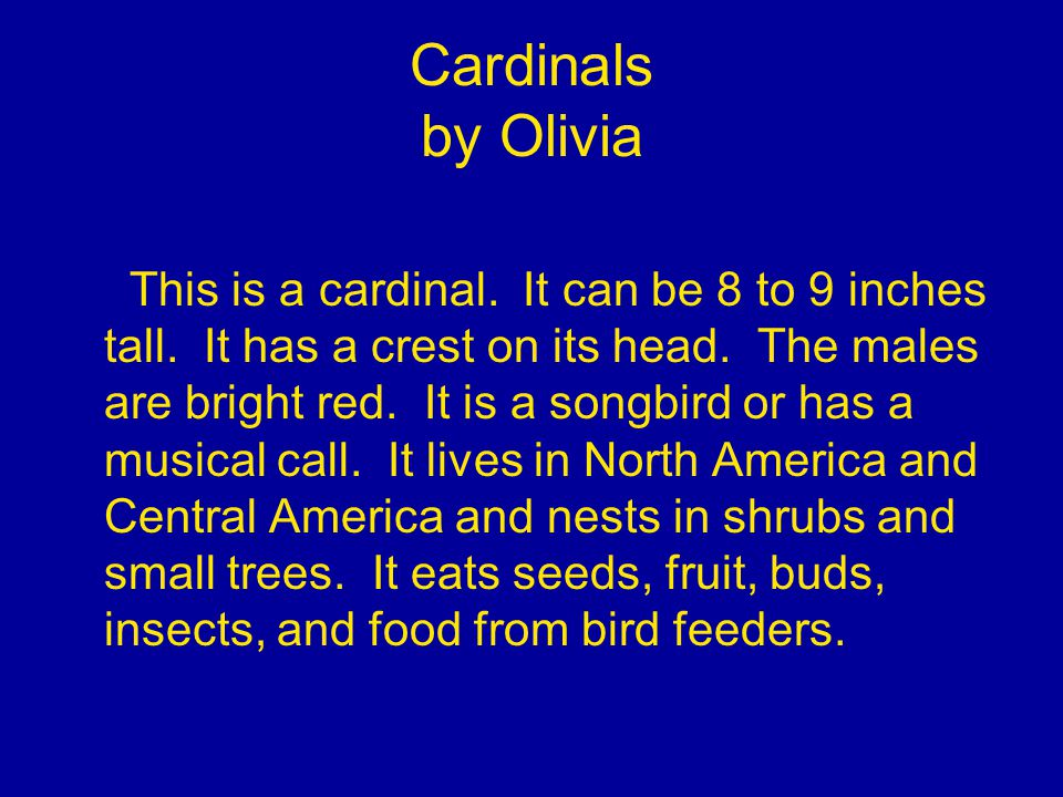 Cardinals by Olivia This is a cardinal. It can be 8 to 9 inches tall.