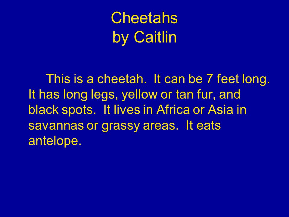 Cheetahs by Caitlin This is a cheetah. It can be 7 feet long.