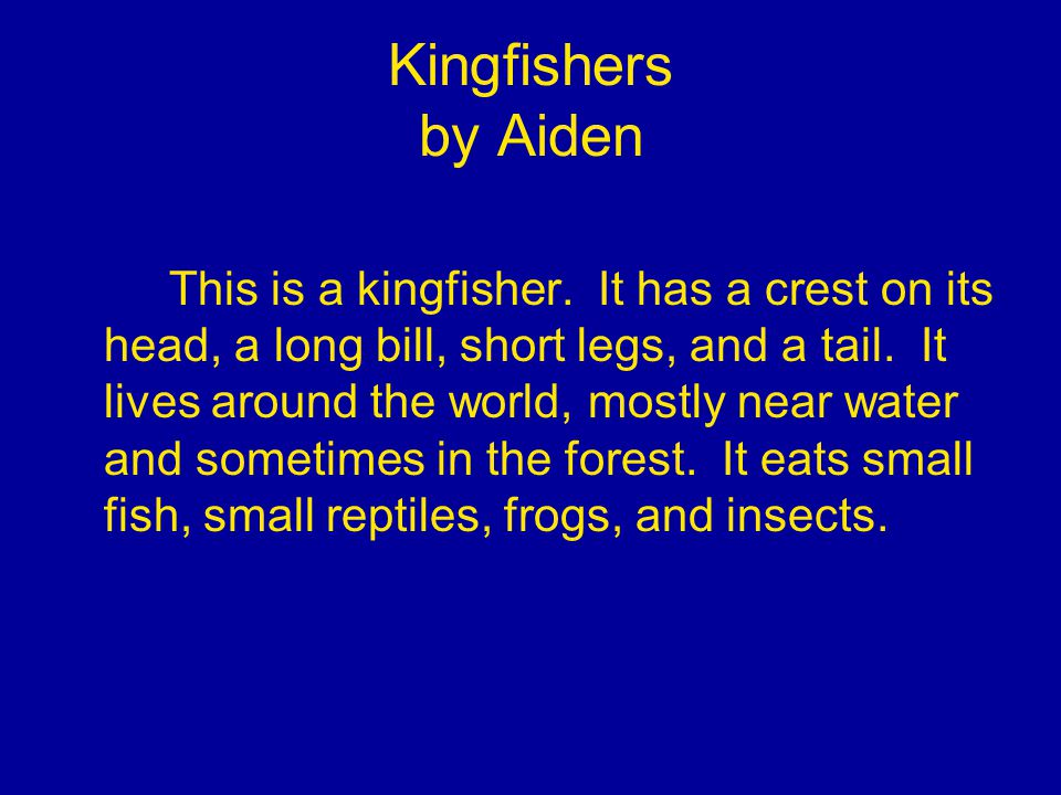 Kingfishers by Aiden This is a kingfisher.