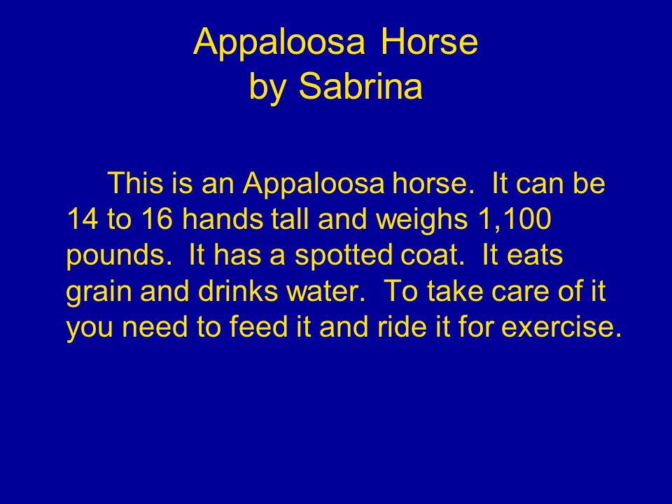 Appaloosa Horse by Sabrina This is an Appaloosa horse.