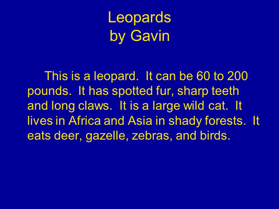 Leopards by Gavin This is a leopard. It can be 60 to 200 pounds.
