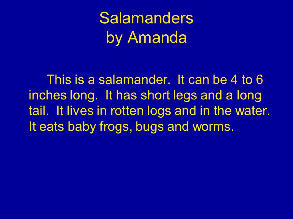 Salamanders by Amanda This is a salamander. It can be 4 to 6 inches long.
