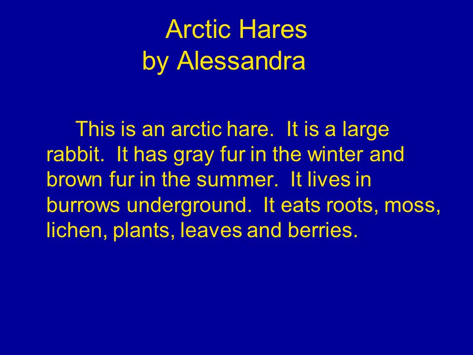 Arctic Hares by Alessandra This is an arctic hare.