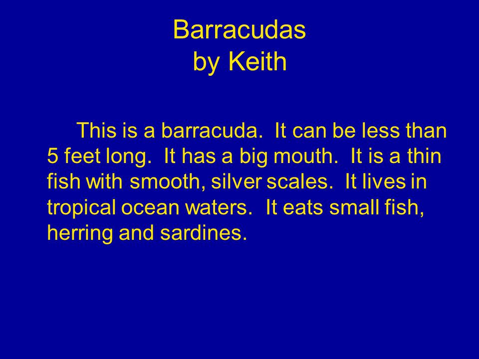 Barracudas by Keith This is a barracuda. It can be less than 5 feet long.