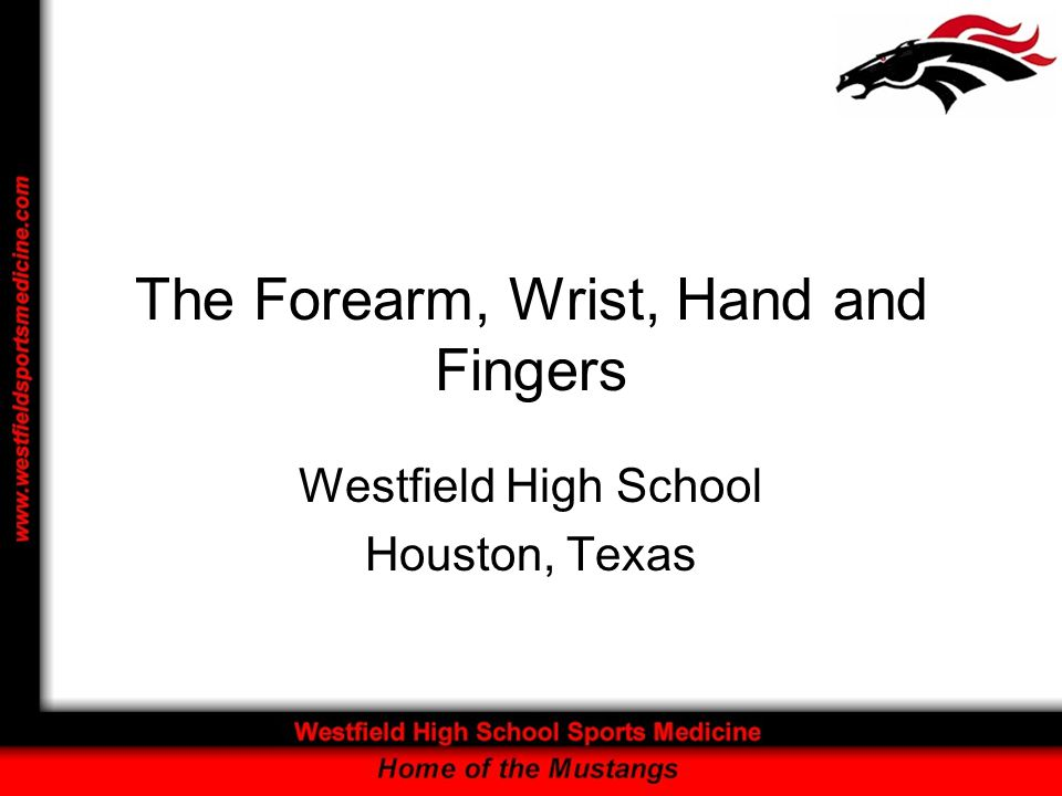 The Forearm, Wrist, Hand and Fingers Westfield High School Houston, Texas