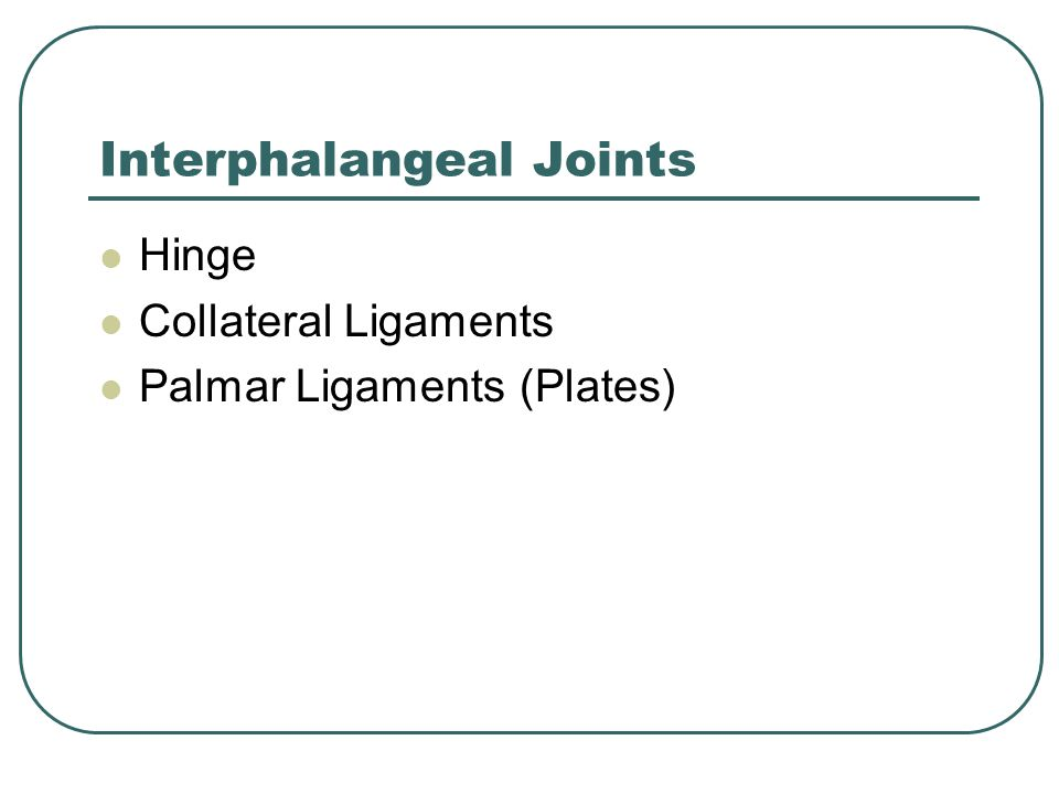 Interphalangeal Joints Hinge Collateral Ligaments Palmar Ligaments (Plates)
