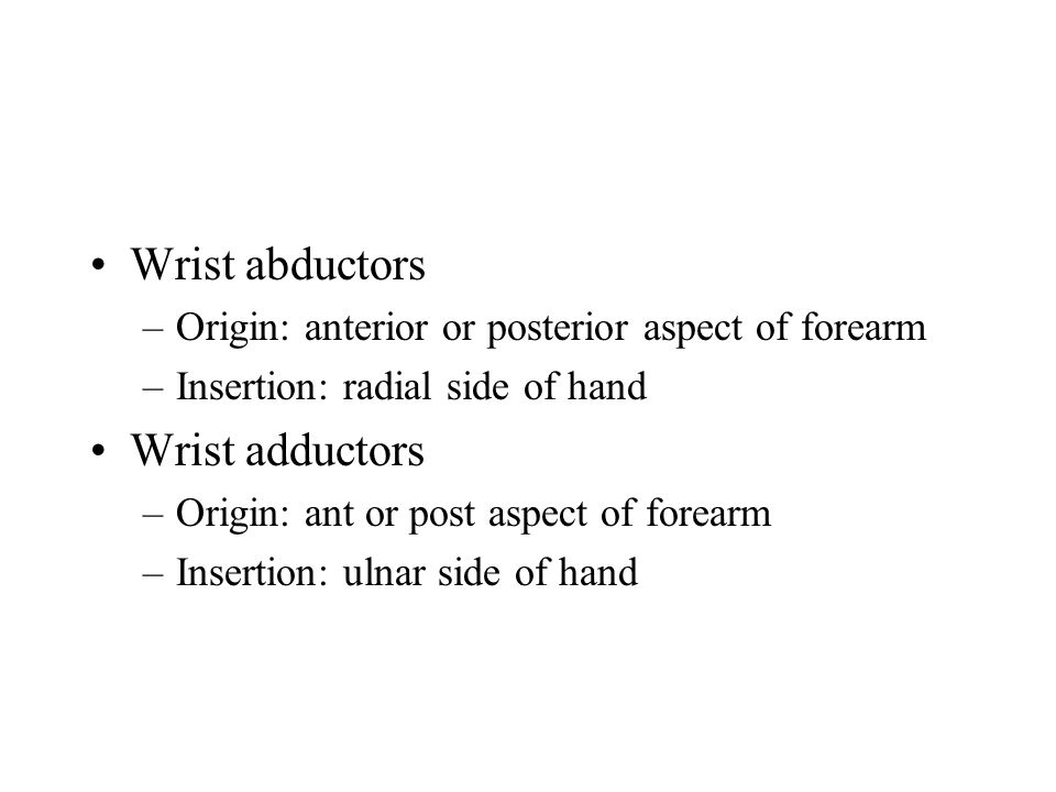 Wrist abductors –Origin: anterior or posterior aspect of forearm –Insertion: radial side of hand Wrist adductors –Origin: ant or post aspect of forear
