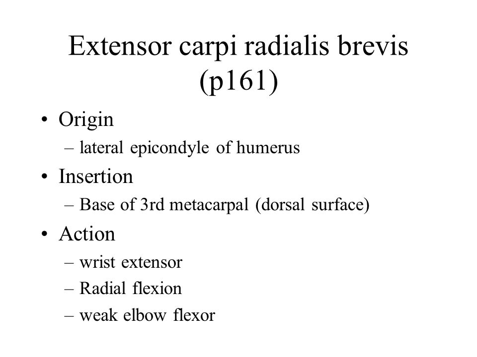 Extensor carpi radialis brevis (p161) Origin –lateral epicondyle of humerus Insertion –Base of 3rd metacarpal (dorsal surface) Action –wrist extensor