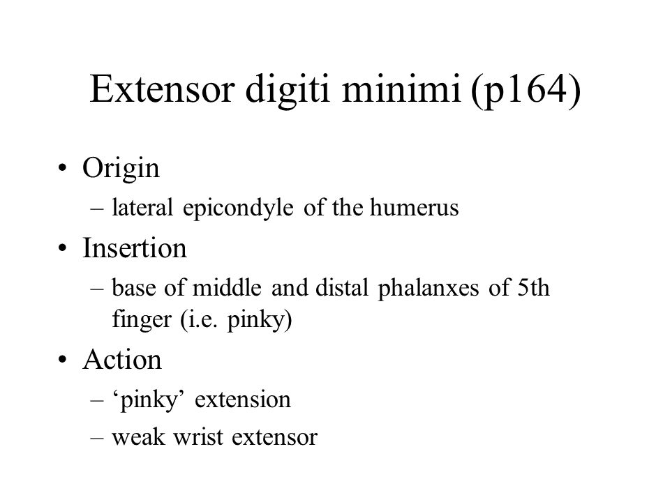 Extensor digiti minimi (p164) Origin –lateral epicondyle of the humerus Insertion –base of middle and distal phalanxes of 5th finger (i.e. pinky) Acti