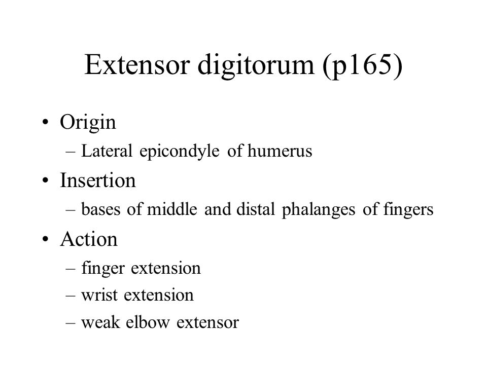 Extensor digitorum (p165) Origin –Lateral epicondyle of humerus Insertion –bases of middle and distal phalanges of fingers Action –finger extension –w