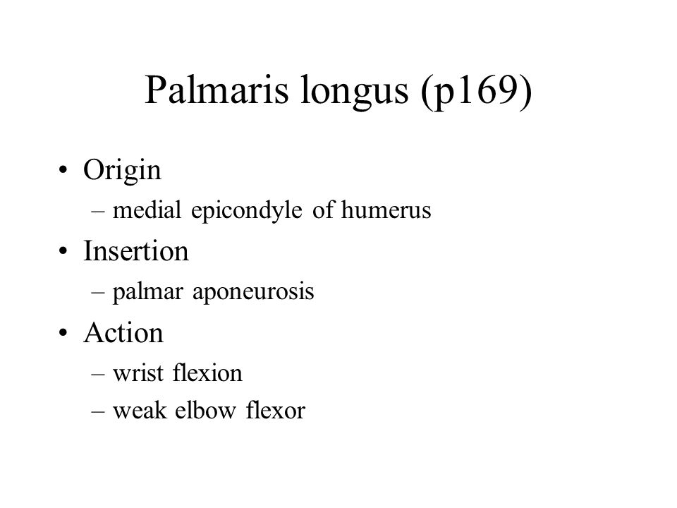 Palmaris longus (p169) Origin –medial epicondyle of humerus Insertion –palmar aponeurosis Action –wrist flexion –weak elbow flexor