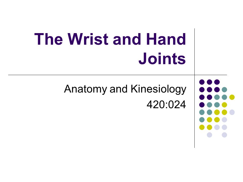 The Wrist and Hand Joints Anatomy and Kinesiology 420:024