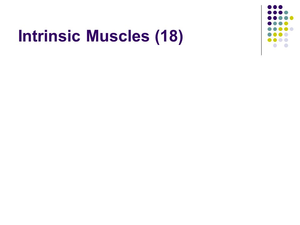 Intrinsic Muscles (18)