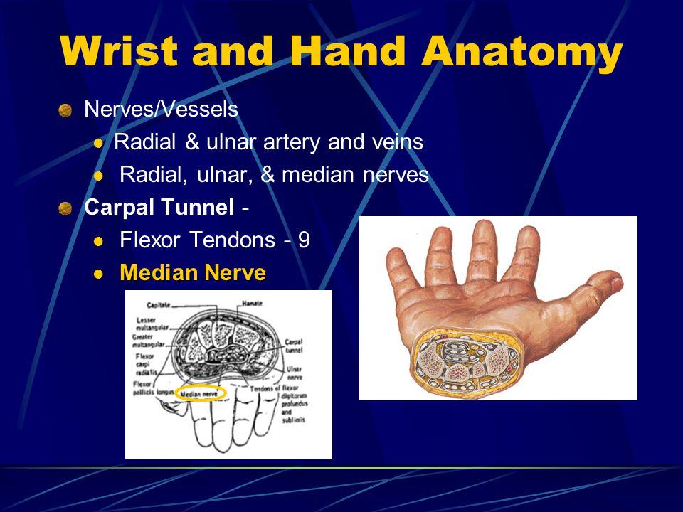 Wrist and Hand Anatomy Nerves/Vessels Radial & ulnar artery and veins Radial, ulnar, & median nerves Carpal Tunnel - Flexor Tendons - 9 Median Nerve
