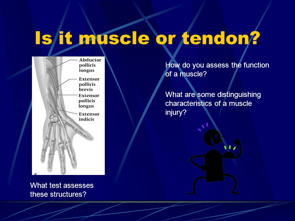 Is it muscle or tendon.What test assesses these structures.