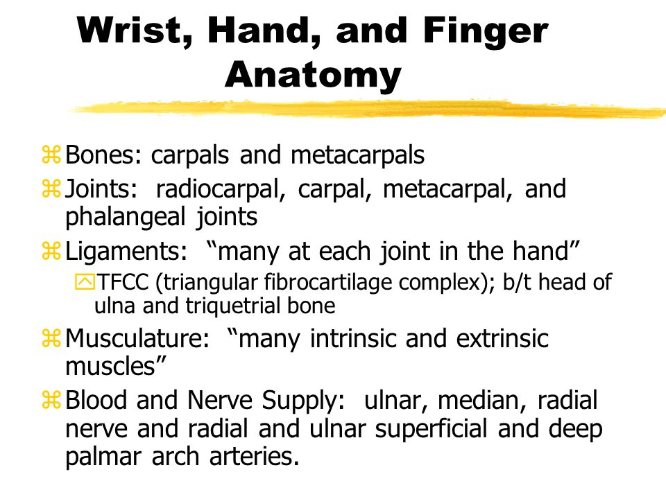 Wrist, Hand, and Finger Anatomy zBones: carpals and metacarpals zJoints: radiocarpal, carpal, metacarpal, and phalangeal joints zLigaments: many at each joint in the hand yTFCC (triangular fibrocartilage complex); b/t head of ulna and triquetrial bone zMusculature: many intrinsic and extrinsic muscles zBlood and Nerve Supply: ulnar, median, radial nerve and radial and ulnar superficial and deep palmar arch arteries.