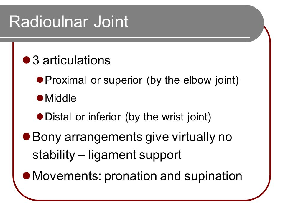 Radioulnar Joint 3 articulations Proximal or superior (by the elbow joint) Middle Distal or inferior (by the wrist joint) Bony arrangements give virtu