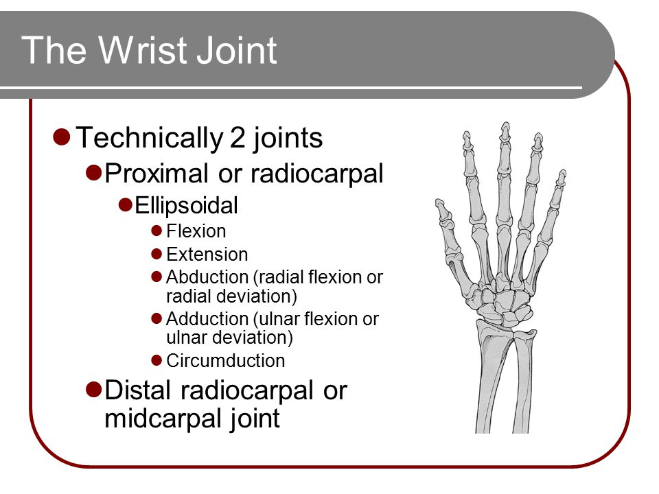 The Wrist Joint Technically 2 joints Proximal or radiocarpal Ellipsoidal Flexion Extension Abduction (radial flexion or radial deviation) Adduction (u