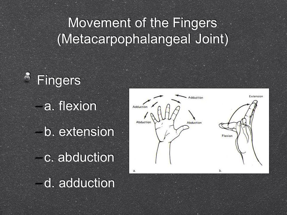 Movement of the Fingers (Metacarpophalangeal Joint) Fingers –a. flexion –b. extension –c. abduction –d. adduction Fingers –a. flexion –b. extension –c