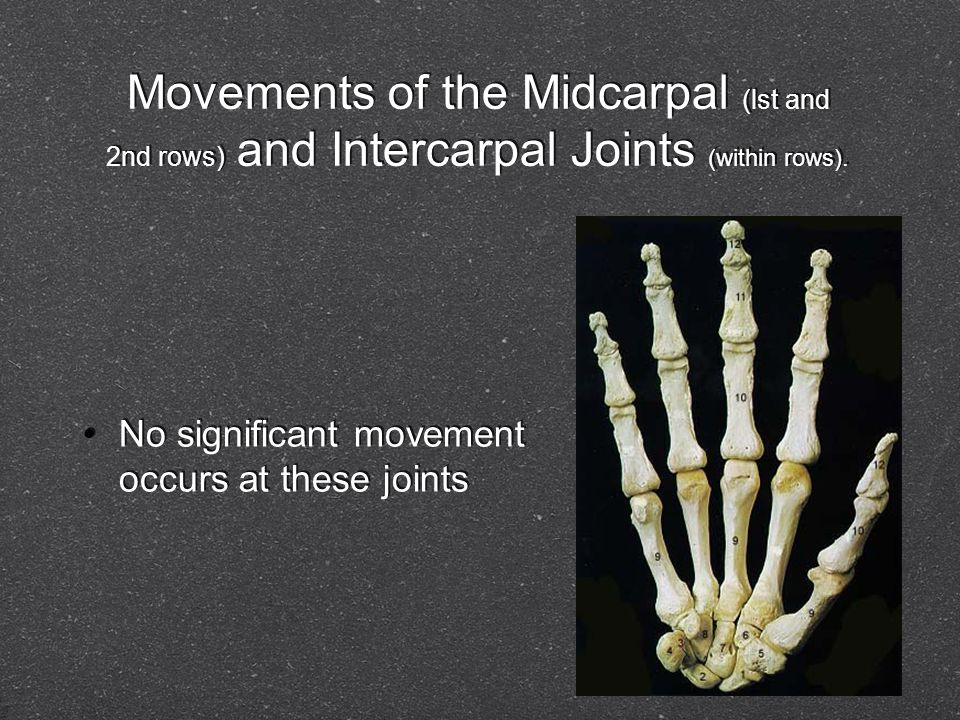 Movements of the Midcarpal (lst and 2nd rows) and Intercarpal Joints (within rows). No significant movement occurs at these joints