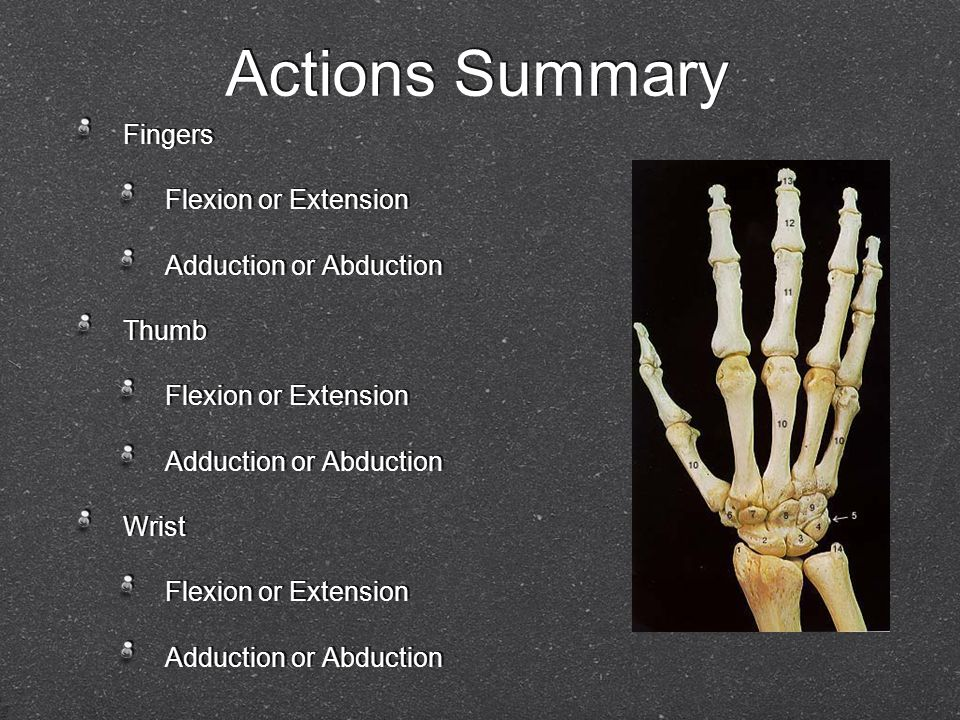 Actions Summary Fingers Flexion or Extension Adduction or Abduction Thumb Flexion or Extension Adduction or Abduction Wrist Flexion or Extension Adduc
