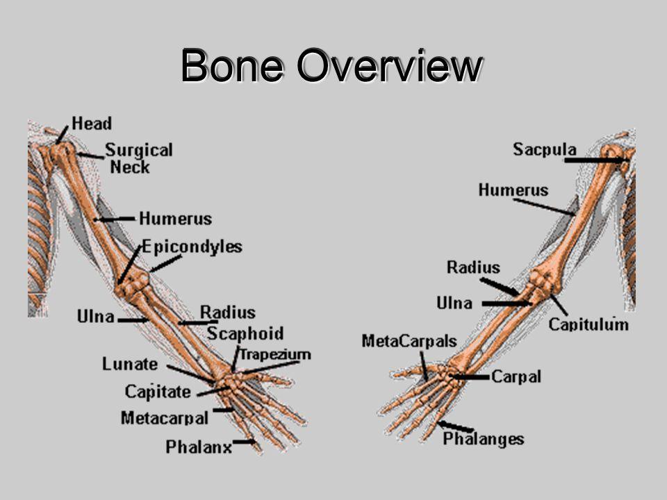 Bone Overview