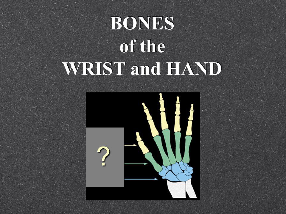 BONES of the WRIST and HAND ?