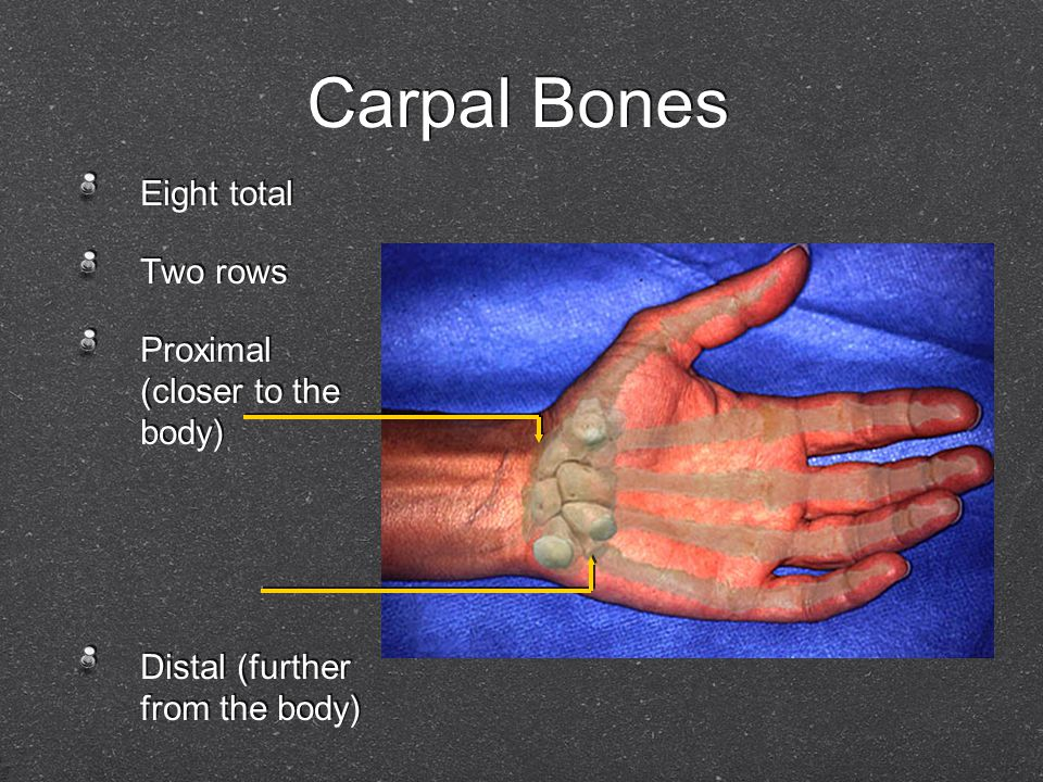 Eight total Two rows Proximal (closer to the body) Distal (further from the body) Eight total Two rows Proximal (closer to the body) Distal (further f