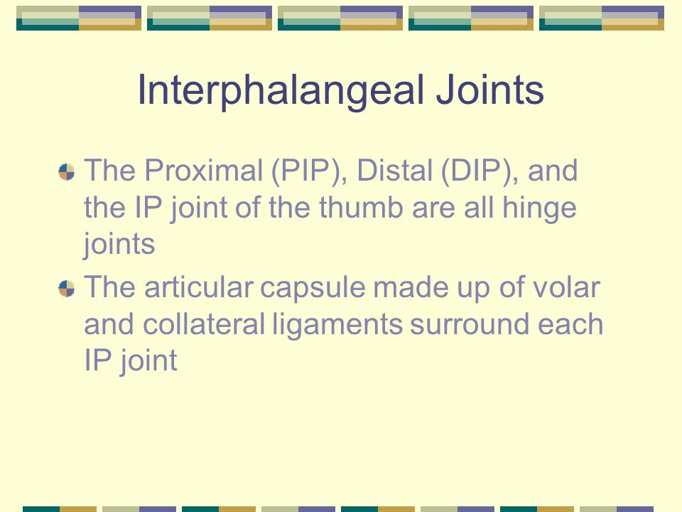 Interphalangeal Joints The Proximal (PIP), Distal (DIP), and the IP joint of the thumb are all hinge joints The articular capsule made up of volar and