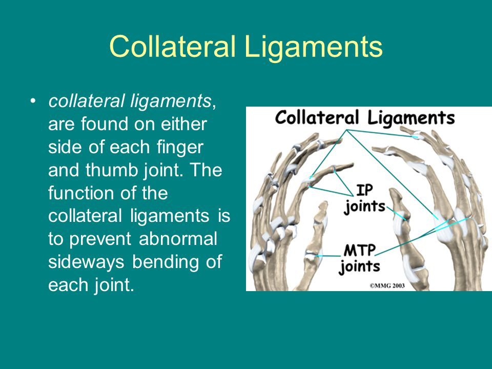 Collateral Ligaments collateral ligaments, are found on either side of each finger and thumb joint. The function of the collateral ligaments is to pre