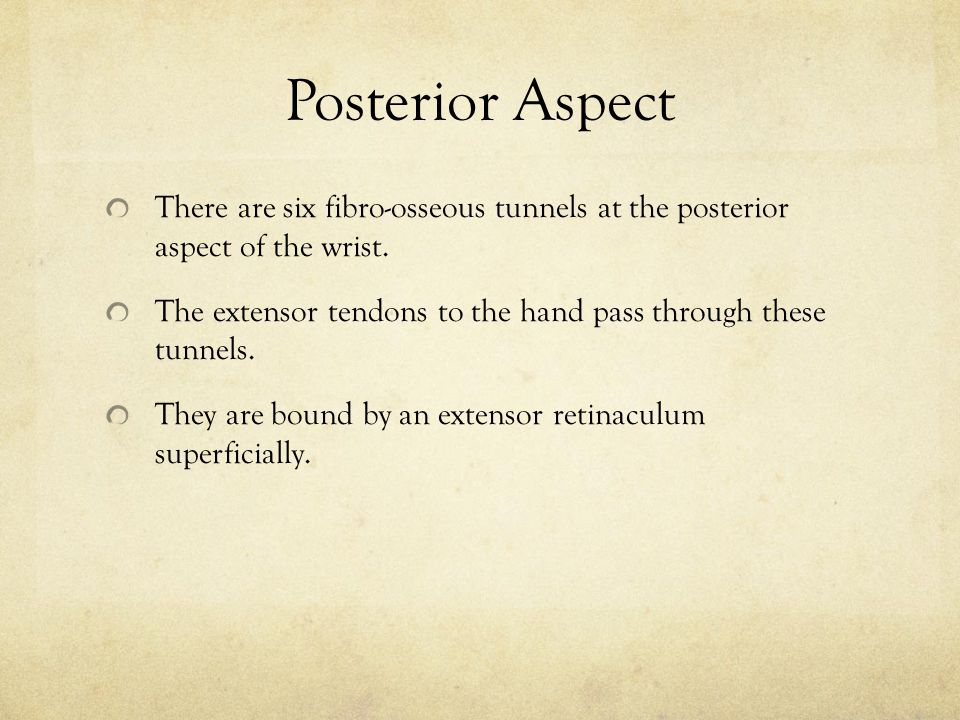Posterior Aspect There are six fibro-osseous tunnels at the posterior aspect of the wrist. The extensor tendons to the hand pass through these tunnels