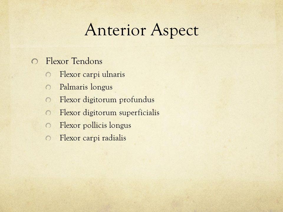 Anterior Aspect Flexor Tendons Flexor carpi ulnaris Palmaris longus Flexor digitorum profundus Flexor digitorum superficialis Flexor pollicis longus F
