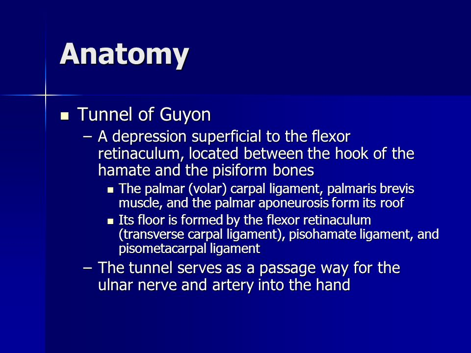 Anatomy Tunnel of Guyon Tunnel of Guyon –A depression superficial to the flexor retinaculum, located between the hook of the hamate and the pisiform b