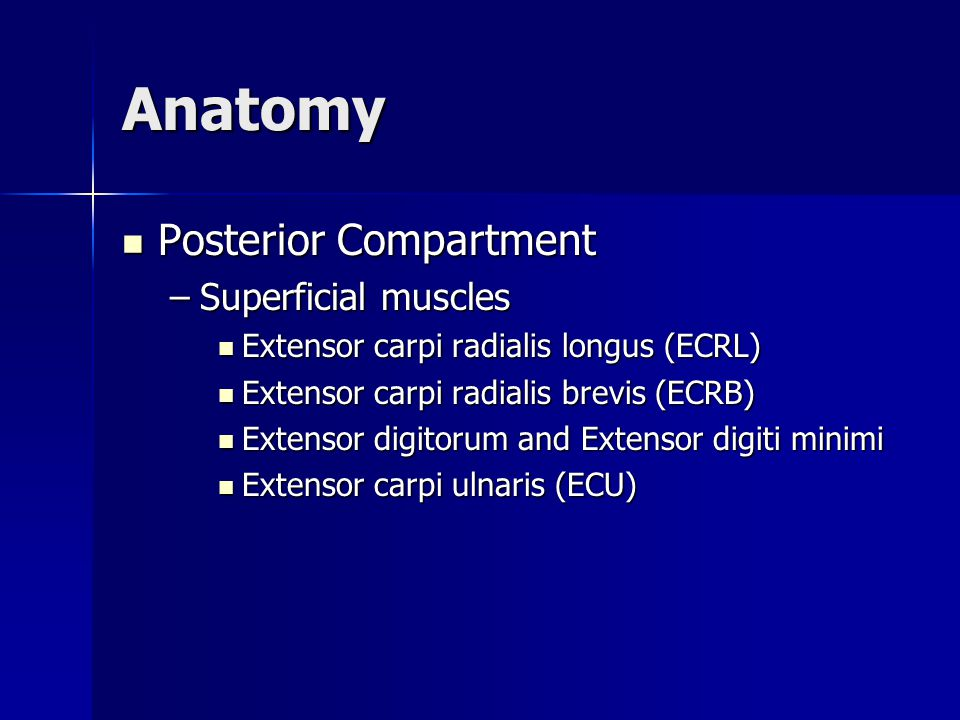 Anatomy Posterior Compartment Posterior Compartment –Superficial muscles Extensor carpi radialis longus (ECRL) Extensor carpi radialis longus (ECRL) E
