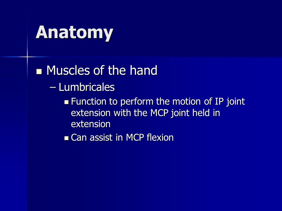 Anatomy Muscles of the hand Muscles of the hand –Lumbricales Function to perform the motion of IP joint extension with the MCP joint held in extension