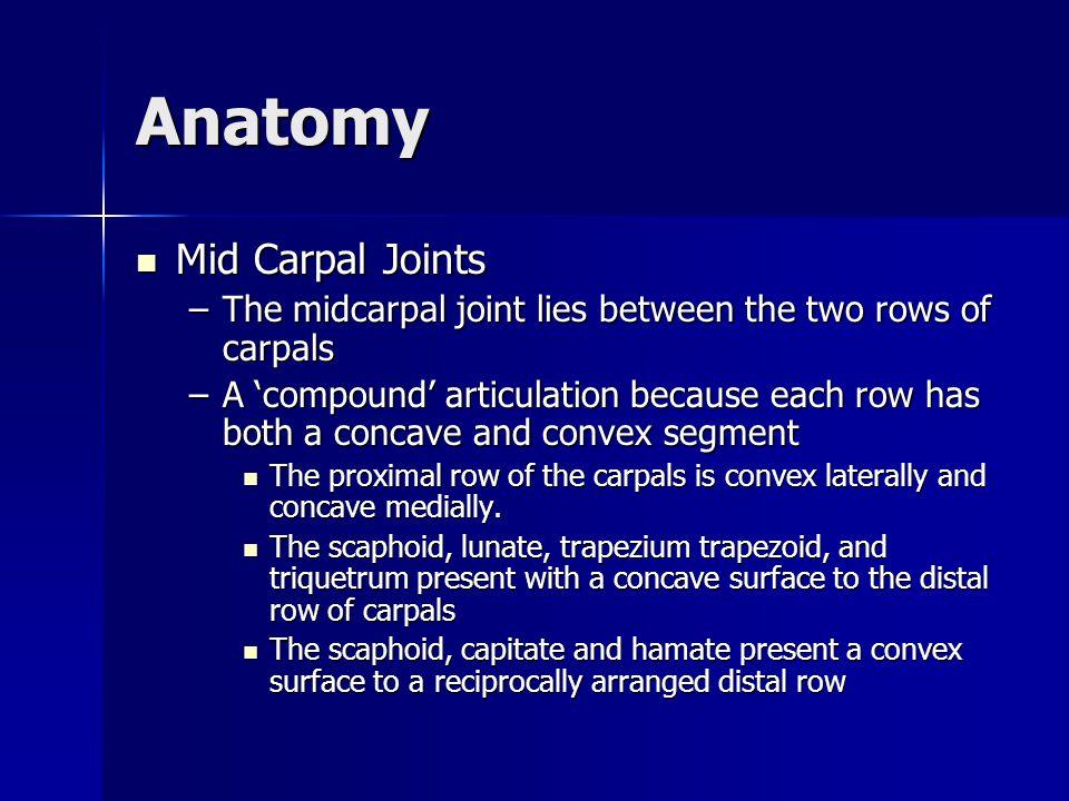 Anatomy Carpometacarpal Joints Carpometacarpal Joints –Articulation between the distal borders of the distal carpal row bones and the bases of the metacarpals –Stability of the CMC joints is provided by the palmar and dorsal carpometacarpal and intermetacarpal ligaments