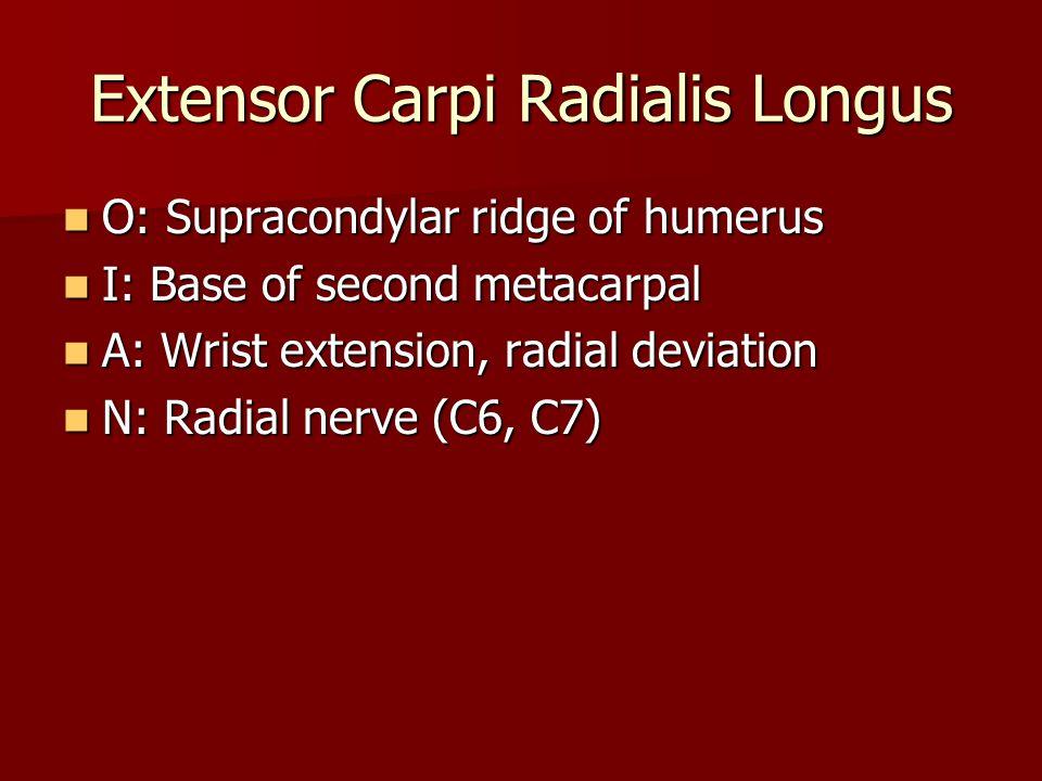 O: Supracondylar ridge of humerus O: Supracondylar ridge of humerus I: Base of second metacarpal I: Base of second metacarpal A: Wrist extension, radial deviation A: Wrist extension, radial deviation N: Radial nerve (C6, C7) N: Radial nerve (C6, C7)