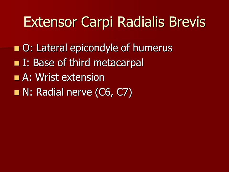 O: Lateral epicondyle of humerus O: Lateral epicondyle of humerus I: Base of third metacarpal I: Base of third metacarpal A: Wrist extension A: Wrist extension N: Radial nerve (C6, C7) N: Radial nerve (C6, C7)