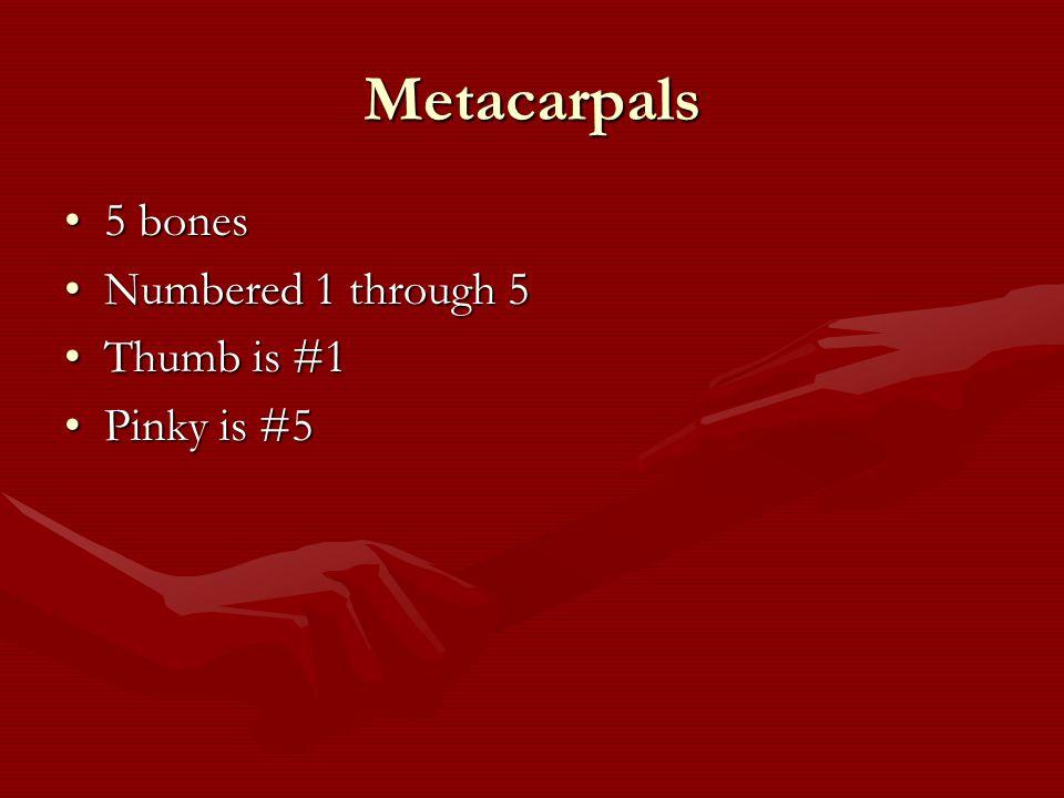 Metacarpals 5 bones5 bones Numbered 1 through 5Numbered 1 through 5 Thumb is #1Thumb is #1 Pinky is #5Pinky is #5