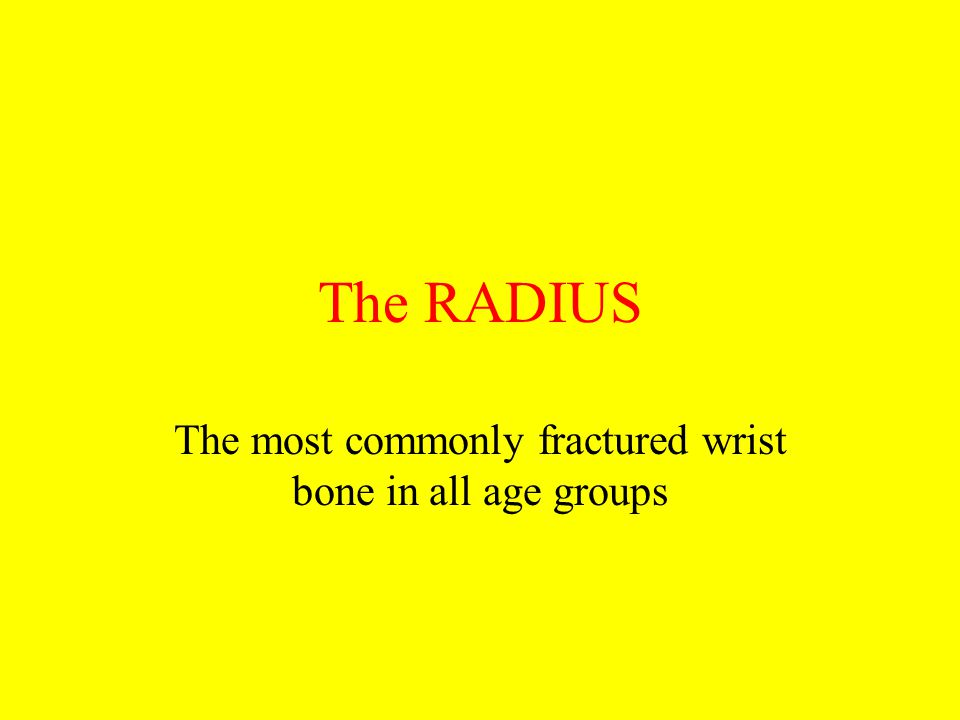 The RADIUS The most commonly fractured wrist bone in all age groups