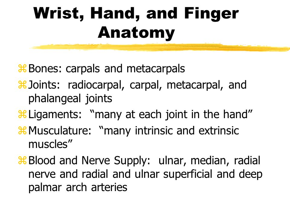 Wrist, Hand, and Finger Anatomy zBones: carpals and metacarpals zJoints: radiocarpal, carpal, metacarpal, and phalangeal joints zLigaments: many at each joint in the hand zMusculature: many intrinsic and extrinsic muscles zBlood and Nerve Supply: ulnar, median, radial nerve and radial and ulnar superficial and deep palmar arch arteries