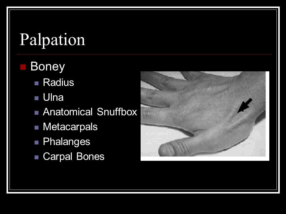 Palpation Boney Radius Ulna Anatomical Snuffbox Metacarpals Phalanges Carpal Bones