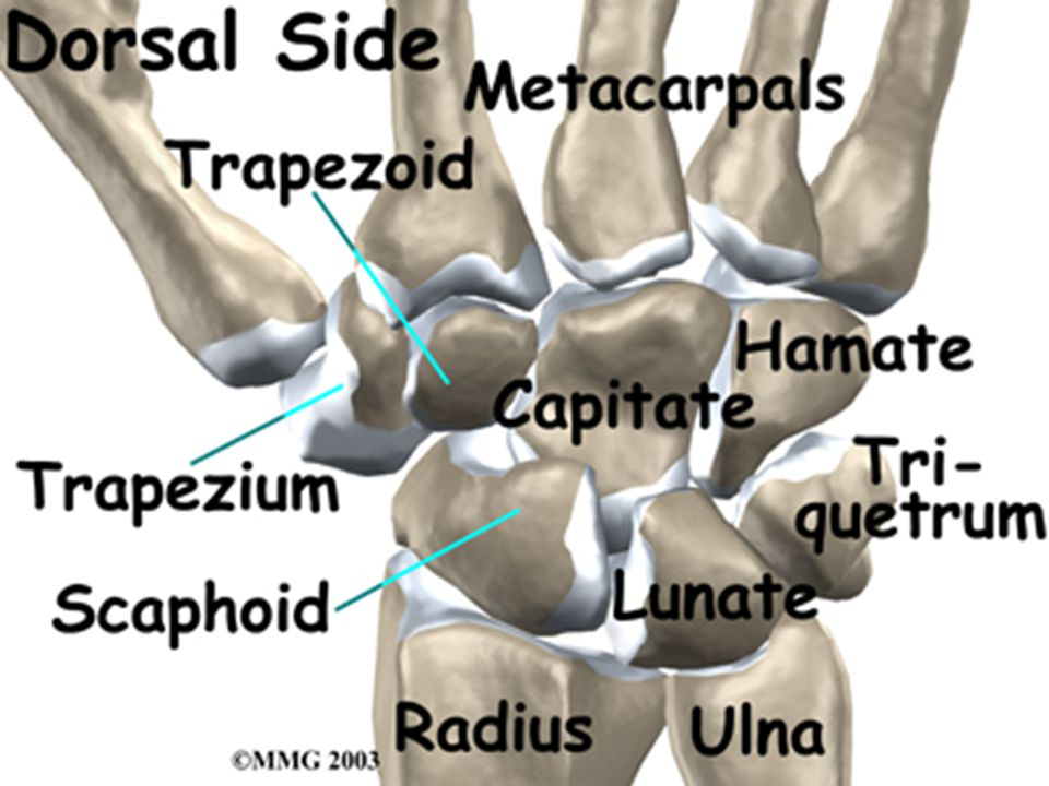 Carpal Tunnel Syndrome The symptoms Include: –Pain, numbness, or tingling in your hand and wrist, especially in the thumb and index and middle fingers; pain may radiate up into the forearm –Increased pain with increased use of your hand, such as when you are driving or reading the newspaper –Increased pain at night –Weak grip and tendency to drop objects held in the hand –Sensitivity to cold –Muscle deterioration especially in the thumb (in later stages).